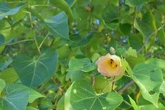 Flor hermosa del día Fotos de archivo