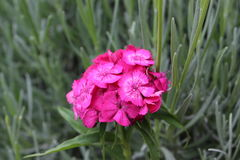 Flor hermosa del fondo verde natural Foto de archivo libre de regalías