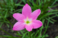 Flor hermosa del lirio Imagenes de archivo