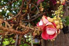 Flor hermosa del obús fotos de archivo libres de regalías