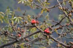Flor hermosa del rojo del árbol Fotos de archivo
