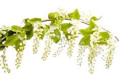 Flor hermosa en blanco Imagenes de archivo