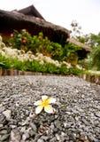 Flor hermosa en el callejón con la casa de planta baja Foto de archivo