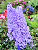 Flor hermosa en el jardín fotografía de archivo