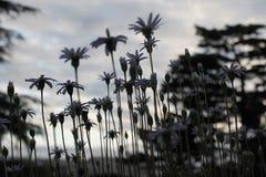 Flor hermosa en el jardín Foto de archivo