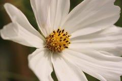 Flor hermosa en el jardín botánico Foto de archivo