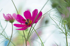 Flor hermosa en el jardín con luz del sol, fondo de la naturaleza y colorido con el área vacía para el texto, crecimiento de flor Fotos de archivo libres de regalías