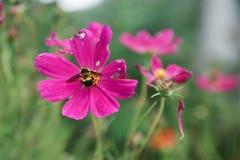 Flor hermosa en el jardín con luz del sol, fondo de la naturaleza y colorido con el área vacía para el texto, crecimiento de flor Foto de archivo
