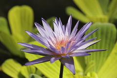 Flor hermosa en el parque Foto de archivo