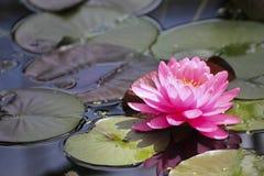 Flor hermosa en el parque Fotos de archivo