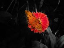 Flor hermosa en foco selectivo Fotografía de archivo