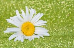 Flor hermosa en fondo verde claro Fotos de archivo