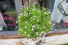 Flor hermosa en grupos de hierba Imagenes de archivo
