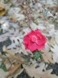 Flor hermosa en hojas foto de archivo