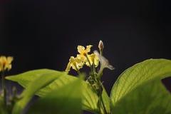 Flor hermosa en la planta fotos de archivo