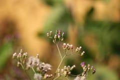 Flor hermosa en la planta imagen de archivo libre de regalías
