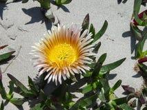 Flor hermosa en la playa blanca de la arena Imagenes de archivo