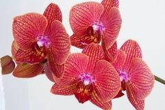 Flor hermosa en la ventana foto de archivo