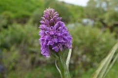 flor hermosa en naturaleza Fotos de archivo