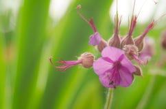 Flor hermosa en primavera Fotografía de archivo