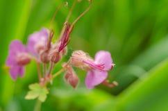 Flor hermosa en primavera Foto de archivo libre de regalías