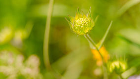 Flor hermosa en primavera Imagen de archivo libre de regalías