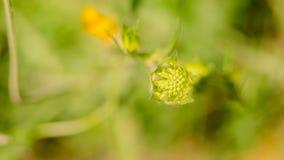 Flor hermosa en primavera Fotos de archivo