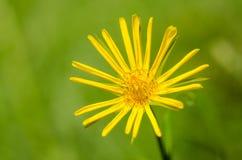 Flor hermosa en primavera Fotografía de archivo libre de regalías