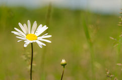 Flor hermosa en primavera Imagenes de archivo