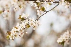 Flor hermosa en tiempo de primavera Imágenes de archivo libres de regalías