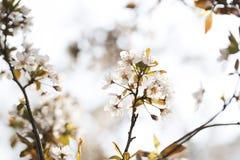 Flor hermosa en tiempo de primavera Fotos de archivo libres de regalías