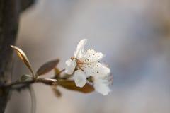 Flor hermosa en tiempo de primavera Foto de archivo