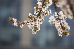 Flor hermosa en tiempo de primavera Fotos de archivo