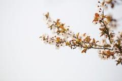 Flor hermosa en tiempo de primavera Imagen de archivo