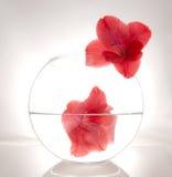 Flor hermosa en un florero redondo Fotografía de archivo