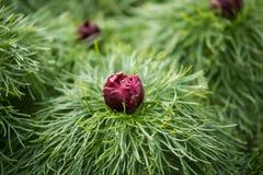 Flor hermosa en un fondo natural Imagenes de archivo