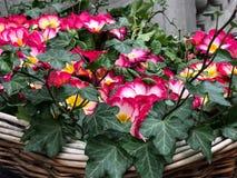 Flor hermosa floreciente Fotos de archivo libres de regalías