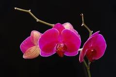 Flor hermosa a las orquídeas Fotos de archivo