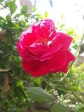 Flor hermosa que mira imagen fotos de archivo libres de regalías