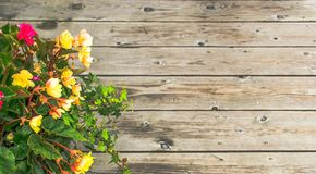 Flor hermosa sobre el fondo de madera Fotografía de archivo libre de regalías
