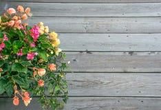Flor hermosa sobre el fondo de madera Imagen de archivo libre de regalías