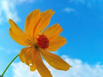 flor hermosa y cielo azul Fotografía de archivo libre de regalías
