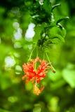 Flor hermoso Fotografía de archivo