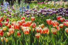 Flor hermoso de la flor en el jardín de Descanso Fotografía de archivo libre de regalías