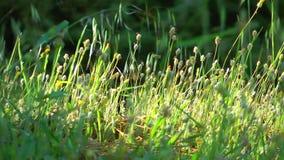 Flor hermoso Flora Flowers en madre naturaleza metrajes