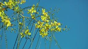 Flor hermoso Flora Flowers en madre naturaleza almacen de video