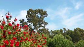 Flor hermoso Flora Flowers en madre naturaleza almacen de metraje de vídeo