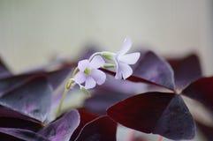 Flor home Imagens de Stock