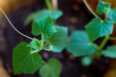 Flor home com folhas verdes Imagem de Stock