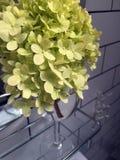 Flor - hydrangea Foto de Stock